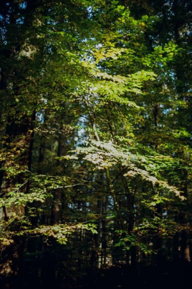 In the woods near Constance, enjoy the beautiful colours of early autumn. BessaR4M, Voigtländer Color-Skopar 21/4.0. Kodak ProImage100.