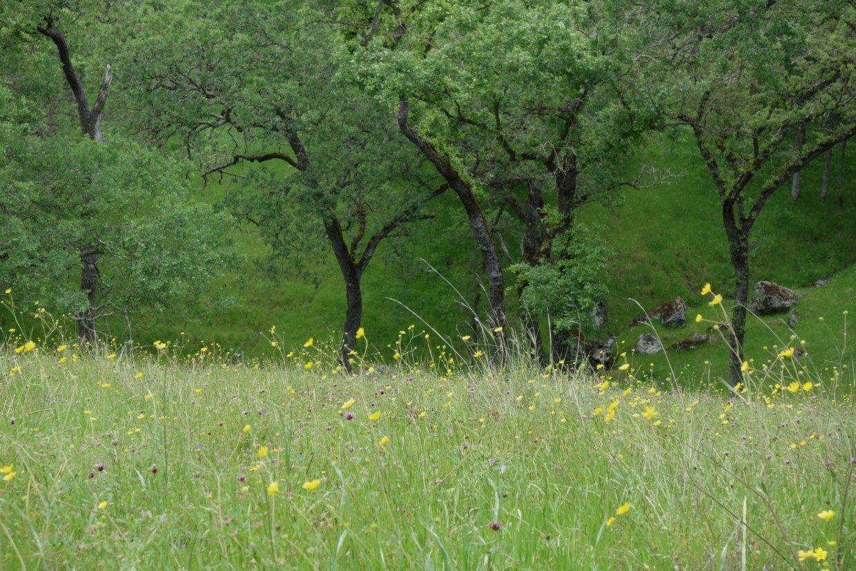 Fields of Flowers (Sunol Regional Wilderness) Photo Credit: Evelyn Calhoon/M-A Chronicle