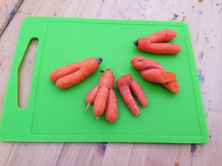 Des carottes mutantes