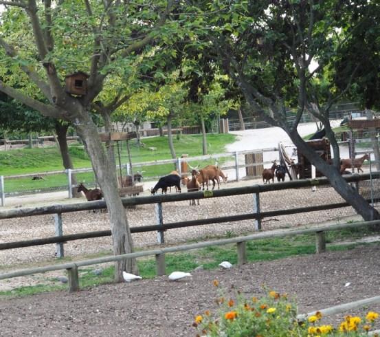 Ferme pédagogique - Parc de Figuerolles - Martigues