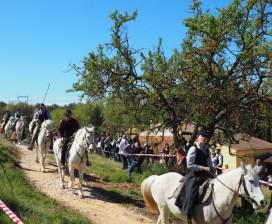 Fête du cheval Calas