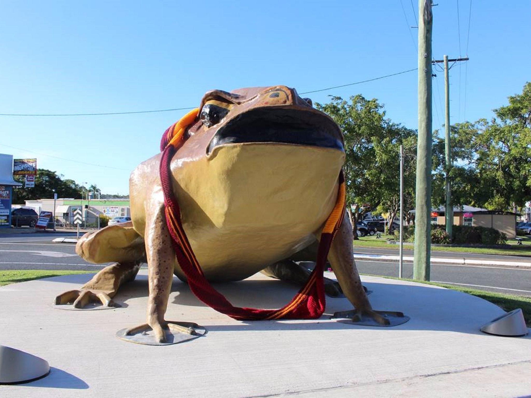 Big Cane Toad de Sarina
