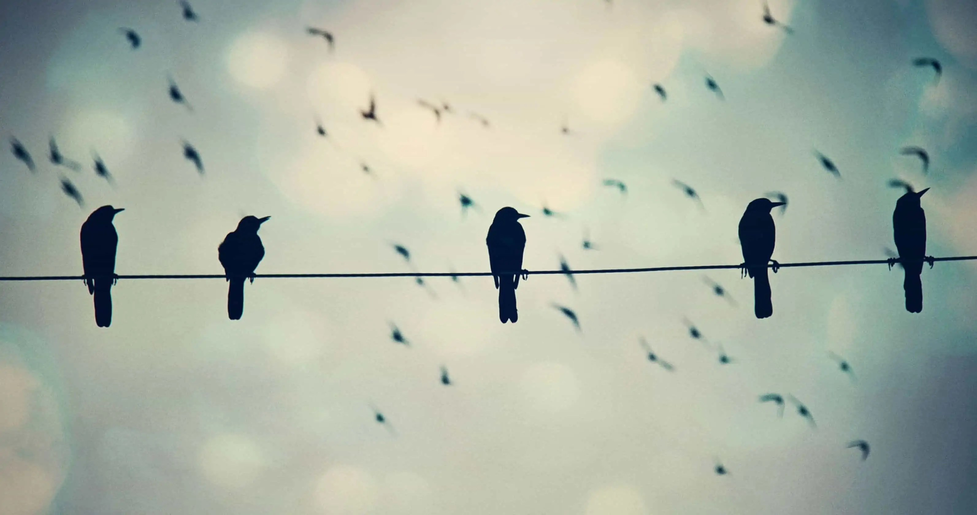 birds-on-a-wire_wallpprs.com_