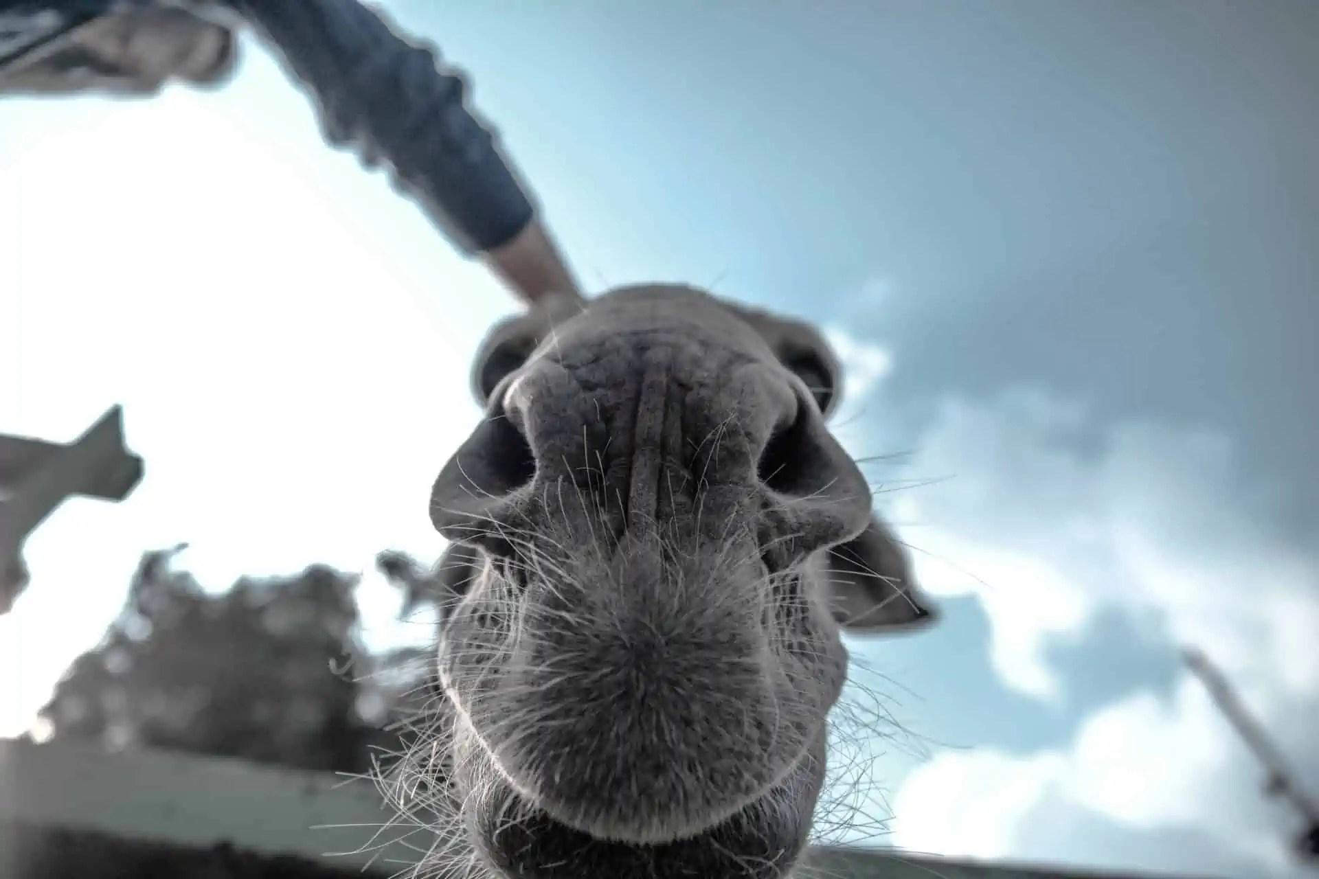 animal-close-up-donkey-87001