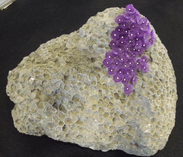 Prehistoric Sea Life Fossils