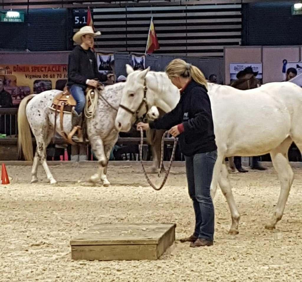 acheter un poney des amériques en france