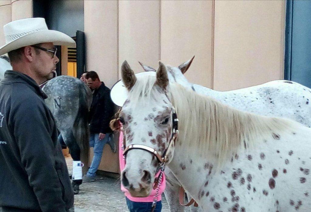 acheter un poney des amériques près de lyon
