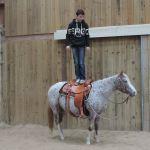 equitation western elevage de chevaux en haute loire