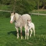 equitation western elevage de chevaux en auvergne rhone alpes