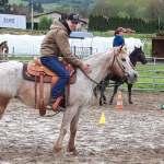 poulain poney des amériques auvergne