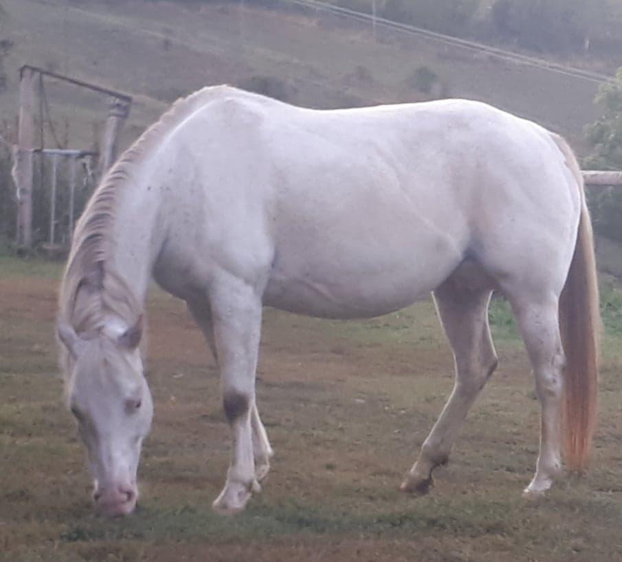 elevage chevaux 43 equitation western haute loire
