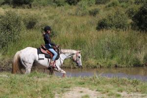 cheval western à vendre