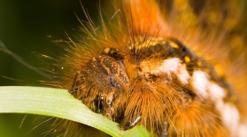 Caterpillars head on grass