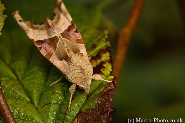 Moth - awaiting ID
