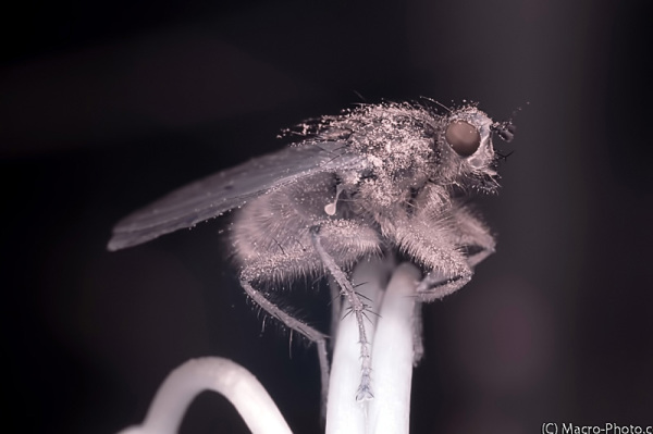 Infrared Fly