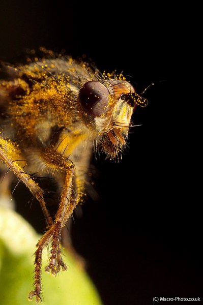 Fly Head on at around 3x Magnification