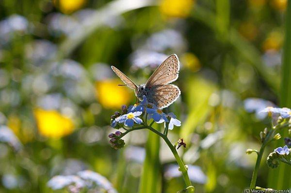 Blue on flowers