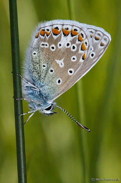 Blue butterfly at rest