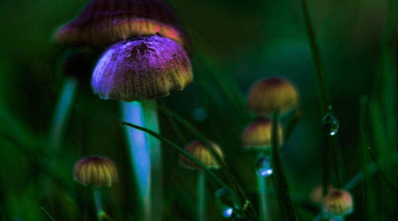 Glowing Fungi in the Grass