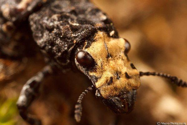 Beetle on log (about 3x lifesize)