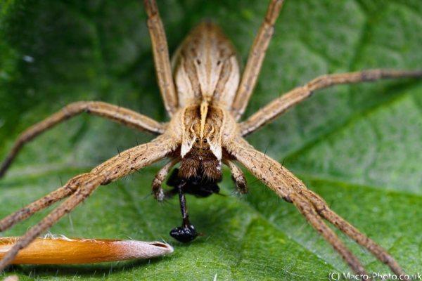Spider & Meal