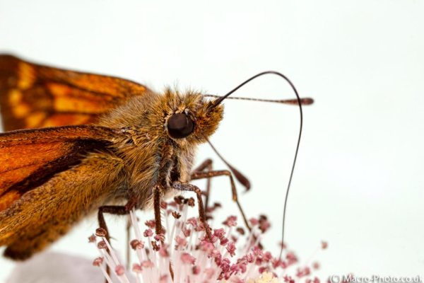 Skipper (about 1.5x).