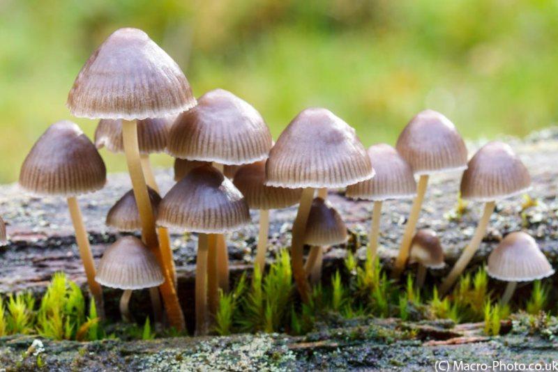 Natural Light Fungi.