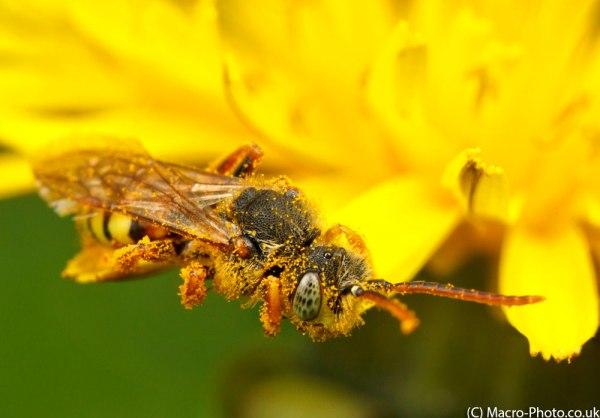 Nomanda Bee Stacked.
