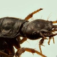 Beetle Lavae Specimen Stack