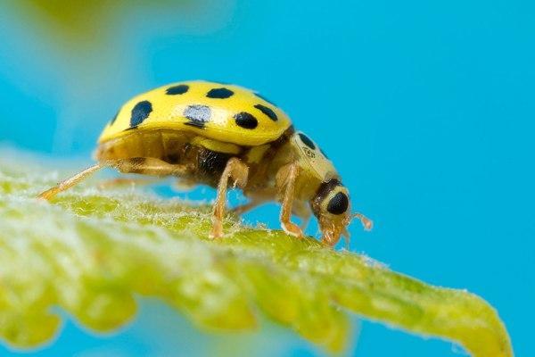 22 Spot Ladybird by Gordon Zammit (4)