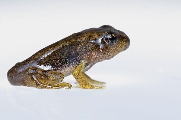 Froglet on whitebox