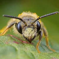 Mining Bees