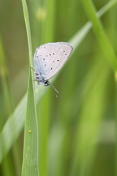 Small Blue (3)