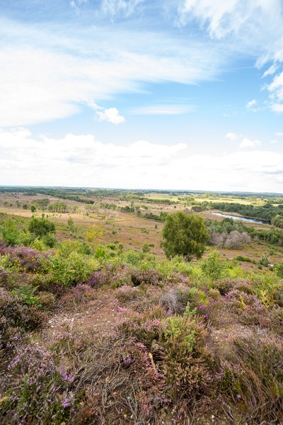 View from top of St Catherine's Hill of the Heath