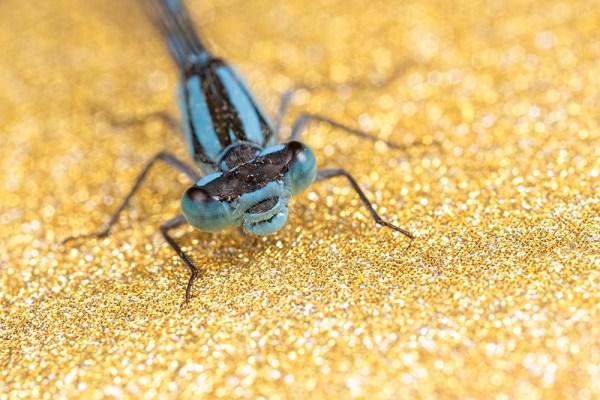 Glittery Gold Blue