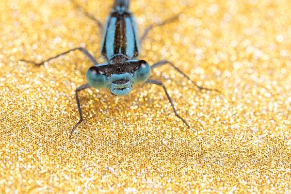 Glittery Gold Blue II