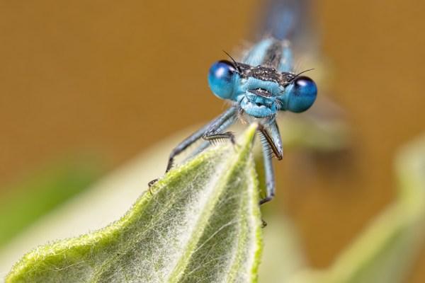 Balancy Blue