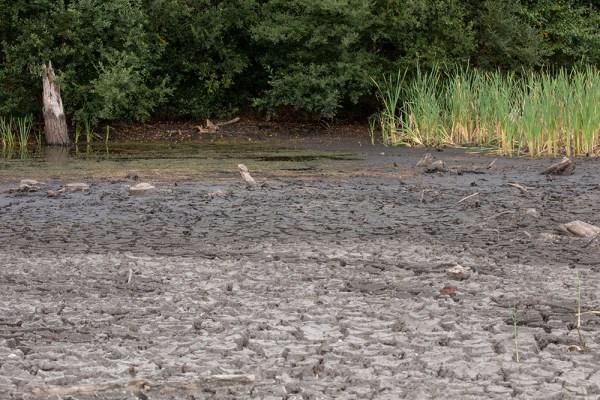 Dry to damper mud