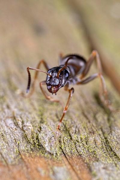 Ant Attitude