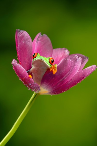 Tree frog in flower