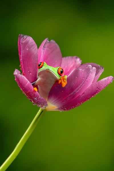 Tree frog in flower