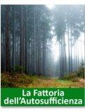 Il potere curativo del bosco