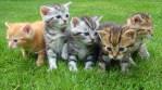 five kitten