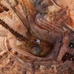 Madagascar: Or et Petites- Mines, un secteur non négligeable, difficilement préhensible