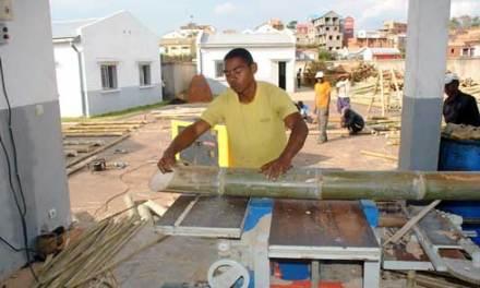 Des investisseurs intéressés au redressement de la société Madagascar Bambou