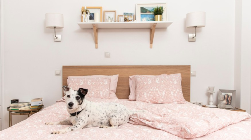 Είναι σωστό να κοιμάσαι στο ίδιο κρεβάτι με το σκύλο ή τη γάτα σου;