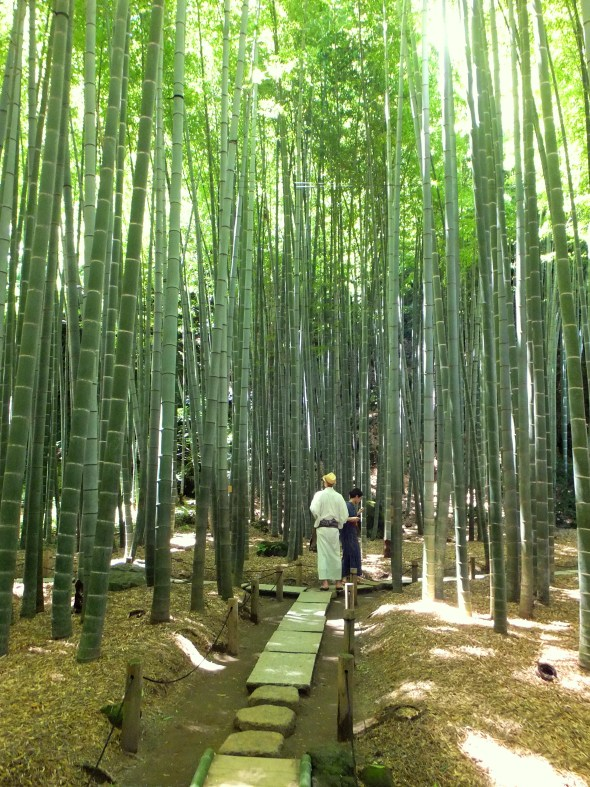 2015 08_Bambooforest