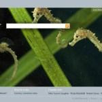 Bing, el nuevo motor de búsqueda de Microsoft