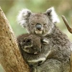 "Ubuntu 9.10 ""Karmic Koala"" Release Candidate"