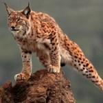 "Ya puedes probar la beta1 de Ubuntu 10.04 ""Lucid Lynx"""